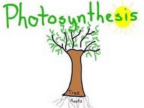 Plants That Don T Need Sun by Photosynthesis In Plants Animation For Kids Youtube