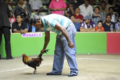 pelea de gallos en la feria de texcoco 2016 gallos de pelea a un solo round vice