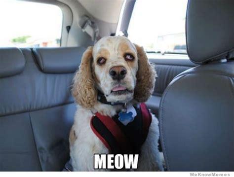 Stoned Dogs Meme - stoned doggie says meow stoner dog weed memes weed memes