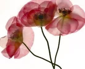 pressed flowers pressed flowers pressed flowers etc
