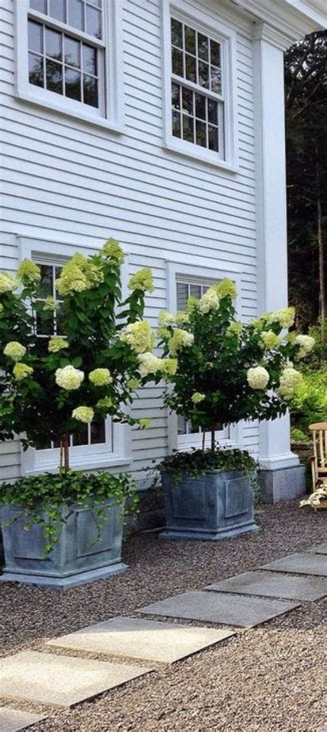 Large Planters For Trees by Best 25 Trees In Pots Ideas On Potted Trees