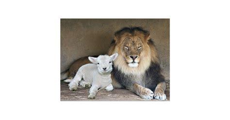 Hochzeitseinladung Lions by L 246 We Und Lamm Postkarten Zazzle