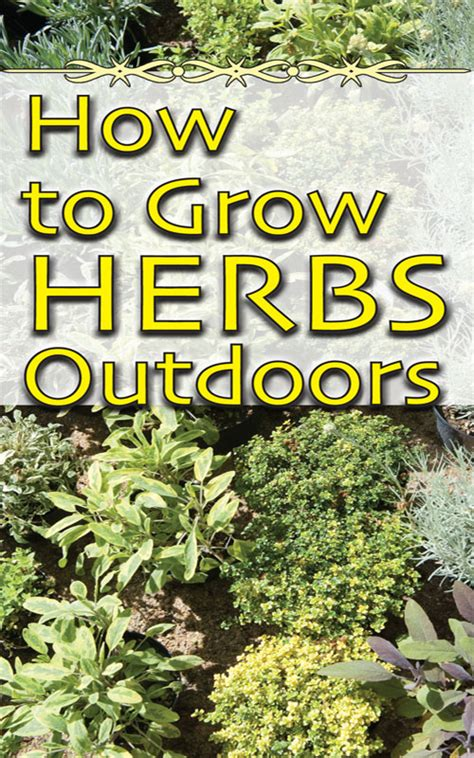 how to grow herbs the joys and challenges of growing herbs outdoors