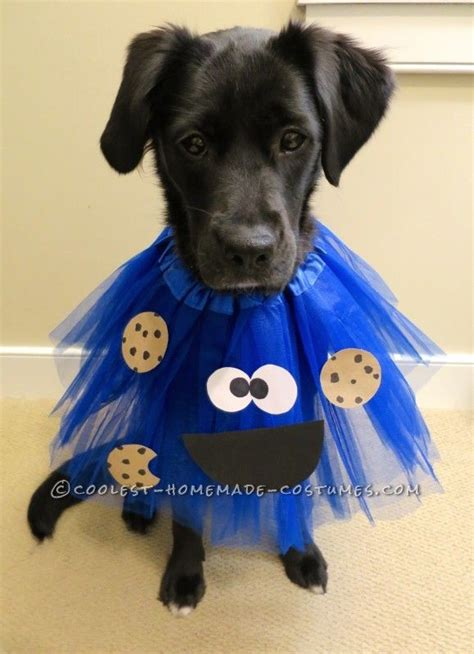 deliciously adorable cookie monster costumes  dogs