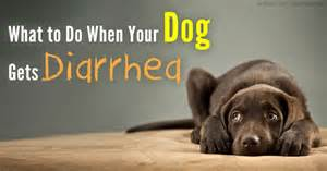 diarrhea in dogs don t let it catch you unprepared