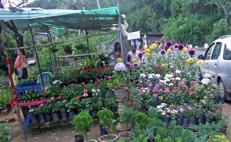 philipveerasingam flower plants  sale haldumulla sri