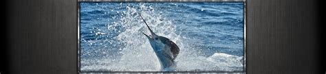 catamaran charter hilton head hilton head charter fishing shark fishing charters