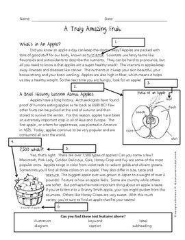 Text Features Practice Worksheets by Using Text Features Worksheet Apples By Rivera Tpt