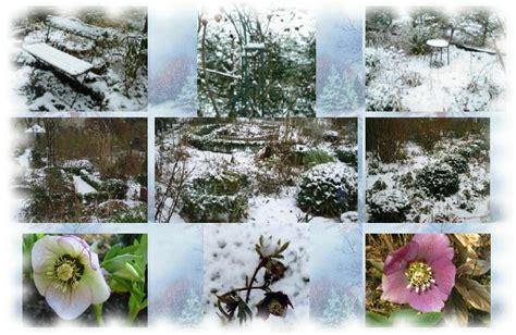 www garten literatur de gartenfotos und pflanzenfotos garten im schnee
