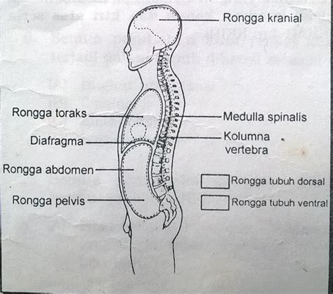Fisiologi Manusia Edisi 8 anatomi tubuh manusia