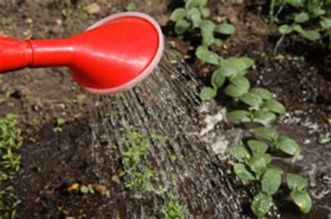how often do you water a vegetable garden watering vegetables thriftyfun