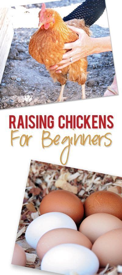 How To Raise Chickens Chicken And We On Pinterest Backyard Chickens For Beginners