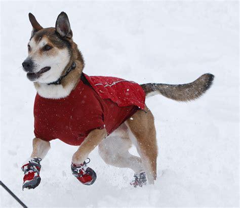 dogs in boots ruffwear bark n boots polar trex insulated boots sportsman s warehouse