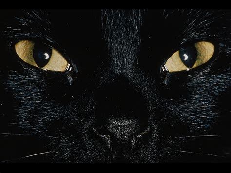 wallpaper dark face black cat wallpaper fun animals wiki videos pictures