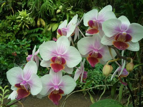 imagenes de flores naturales orquideas orquideas familia feliz joven