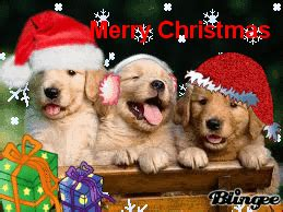 merry christmas  puppys picture  blingeecom