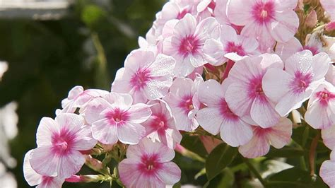 list of common garden flowers awesome 25 common garden flowers design ideas of common