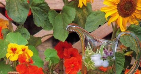 fiori di bach dove si comprano fiori commestibili scopriamo le ricette pi 249 originali e