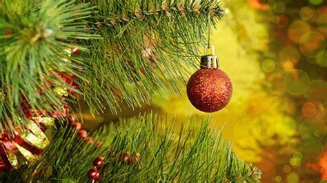 kiefer als weihnachtsbaum nicht ganz unkompliziert