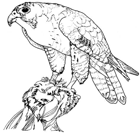 hawk coloring page animals town animals color sheet