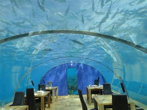 ithaa undersea restaurant prices ithaa picture of ithaa undersea restaurant rangali