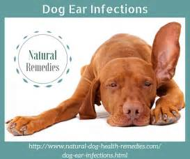 ear infection remedies for dogs ear infections home remedies for yeast infection in ear