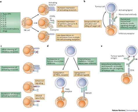 frontiers pathological mobilization and activities cancer immunology immunotherapy journal