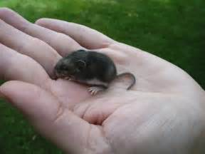 Garden Mouse by Our Acre March 2009