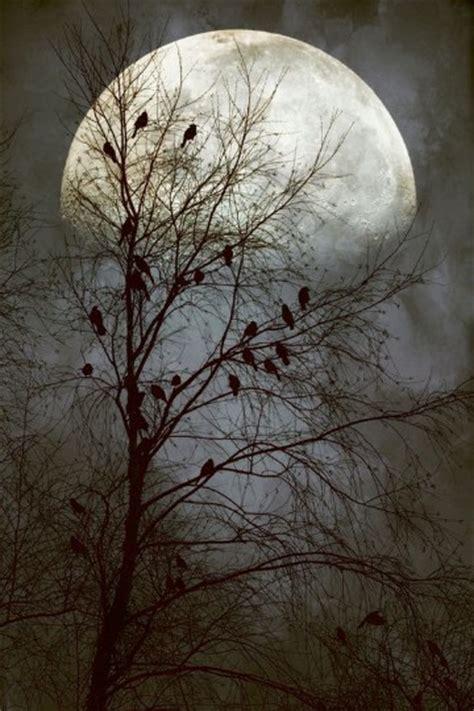 imagenes de lunes hermosas imagenes de lunas hermosas brillantes y con estrellas