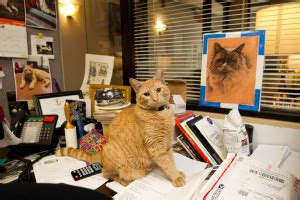 Iconic Cat Story this will soon be the most cat in nyc new york post
