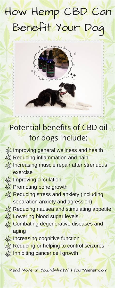 cbd for dogs hemp cbd and treats are all the rage can cbd benefit your