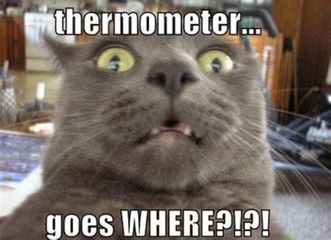Sick Cat Meme - 1000 images about funny on pinterest hilarious
