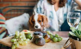 can dogs eat figs can dogs eat grapes woof