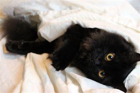 katze kotet ins bett darf die katze im bett schlafen