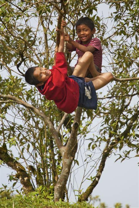 boys tree panama s canopy lodge
