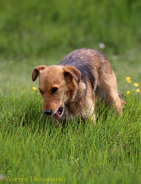 is it ok for dogs to eat grass why do dogs eat grass by katelyn schutz cpdt