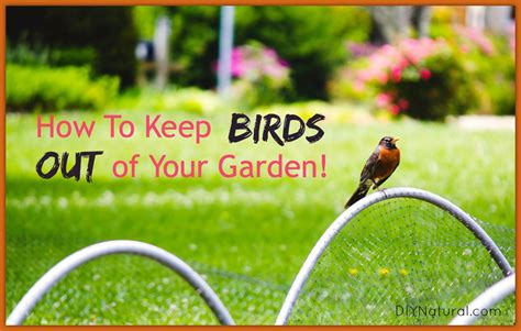 how to your bird how to keep birds out of your garden