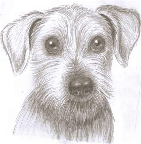 Drawing Dogs by Drawings Of Cliparts Co