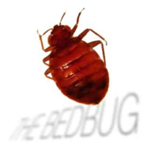 bed bug registry com bed bug registry ohio 28 images bed bug life cycle