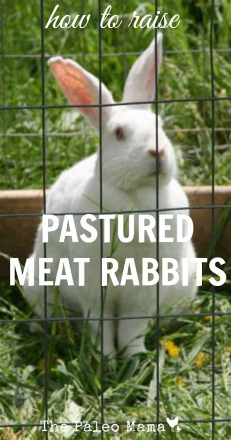 raising meat rabbits your backyard how to raise pastured meat rabbits the paleo mama