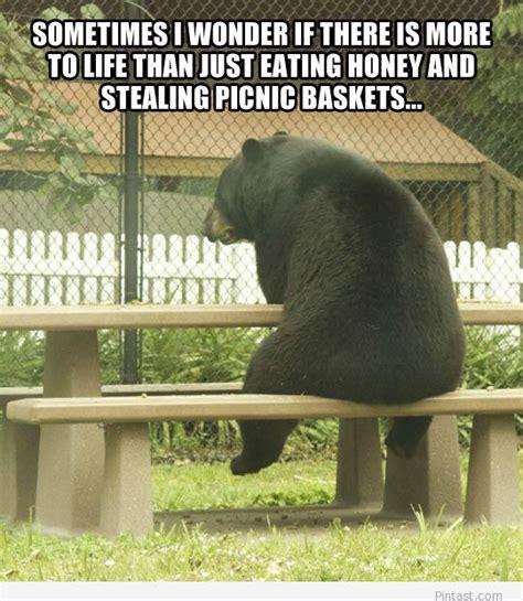 Bear At Picnic Table Meme - funny bear quote 2014 pintast