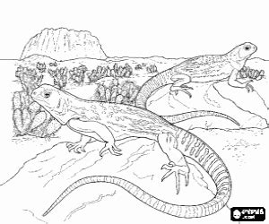 big lizard coloring page reptiles coloring pages printable games