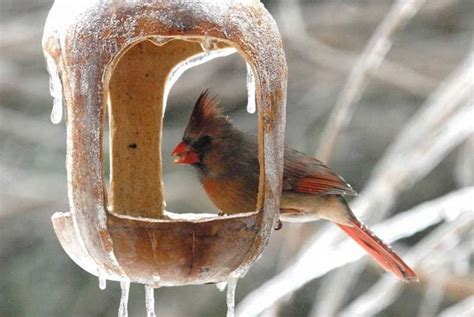 diy winter bird feeding petdiys com