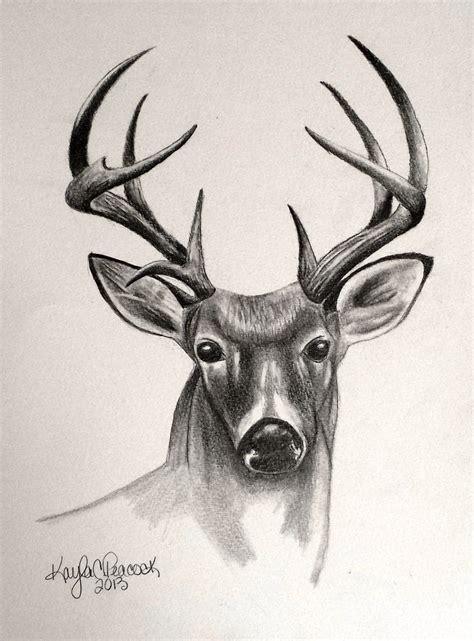 Deer Pencil Drawings deersketch