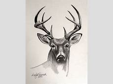 Animals & Nature | Sketchbook Whitetail Buck Drawings