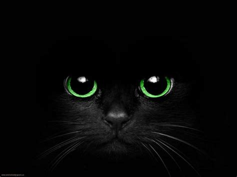 white cat tattoo unidade extra black cat with green eyes by cometsong green for me