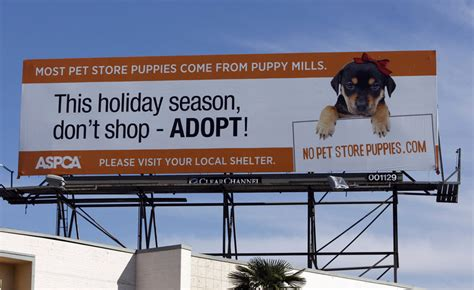 pet stores in los angeles that sell puppies pet store puppy boycott stepped up portland press herald