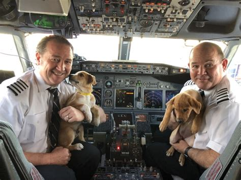 lucky animal rescue travel pr news southwest airlines and lucky animal rescue partner to transport