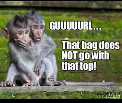 Monkey Meme - monkeys meme funny tingz pinterest