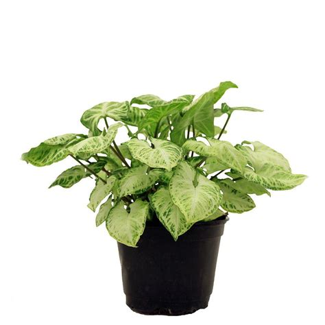 home depot indoor plants 28 images house plants garden